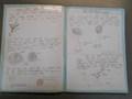 homework 022.JPG
