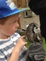 24 06 2014 - KS1 to Huby Birds of Prey (6).jpeg