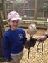 24 06 2014 - KS1 to Huby Birds of Prey (24).jpeg