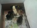Randum and chicks 16.9.14 074.jpg