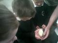 Randum and chicks 16.9.14 093.jpg