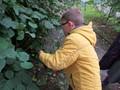 year 4 harvesting hazel stick .JPG