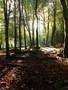Woods.jpg