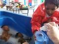 Bathing the babies in the water tray.