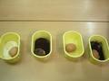 Egg experiment (5).JPG