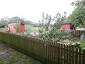 allotment-web.jpg