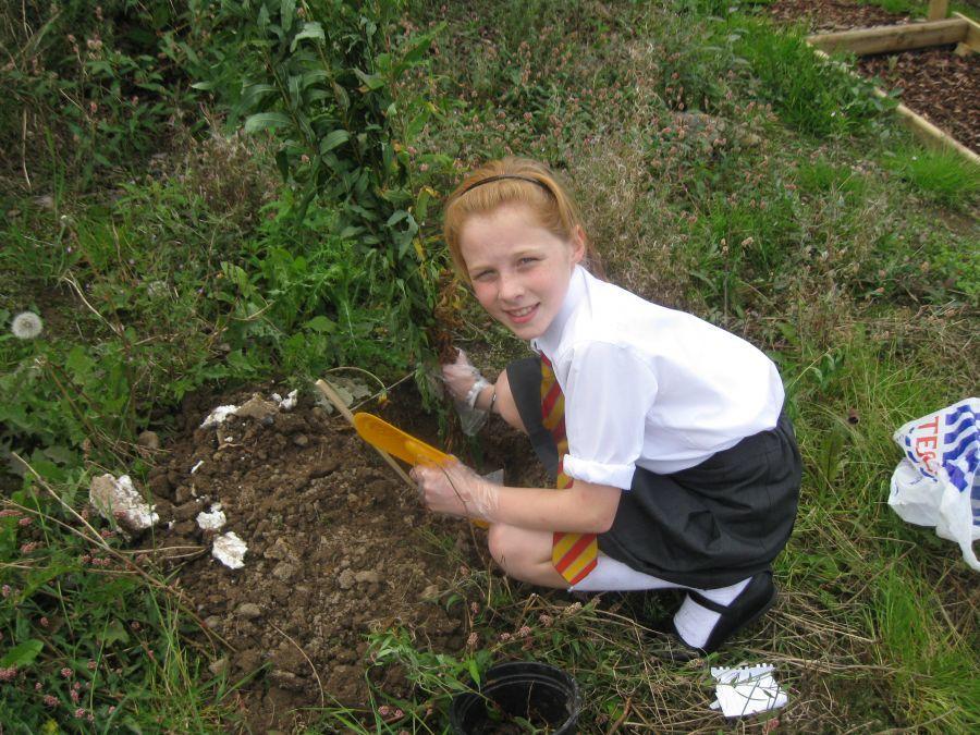Rose, preparing the ground for wild flowers, 2012.