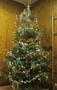 tree (12).JPG