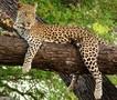 Leopard Pic.jpg