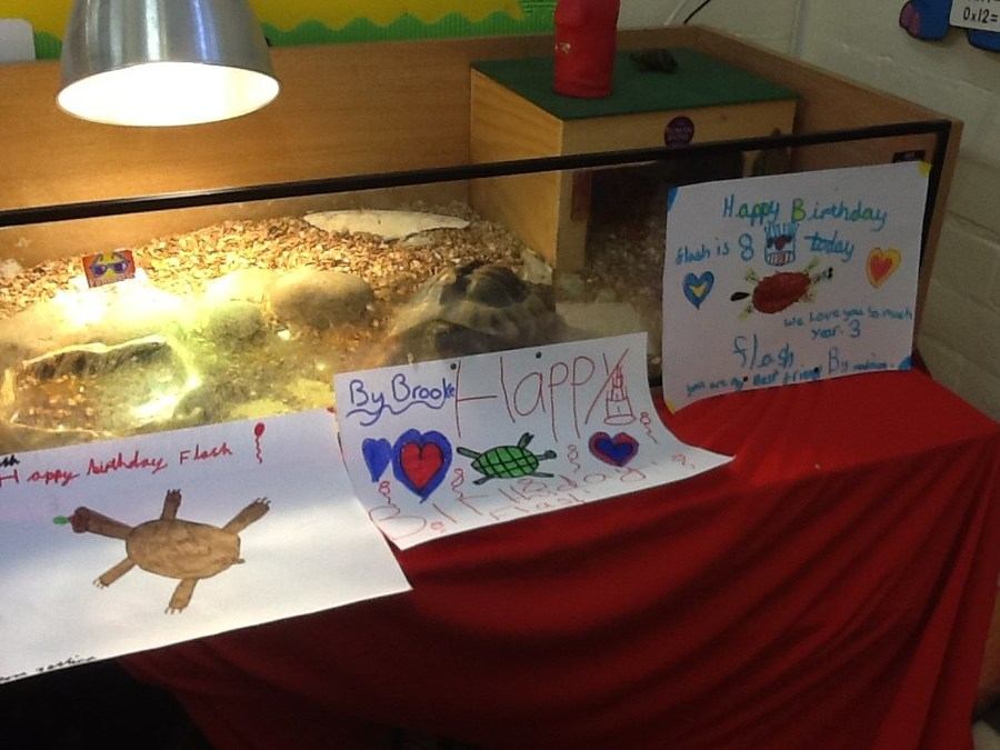 It was Flash's birthday today, he was 8.  The class all sang 'Happy Birthday' and he was given a food trail through the classroom.  Happy Birthday Flash!