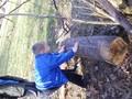 Investigating habitats.JPG