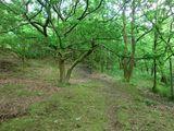 Cowbury Dale Woods<br>