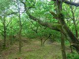 Cowbury Dale Woods 2<br>