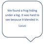 lucus mb.PNG