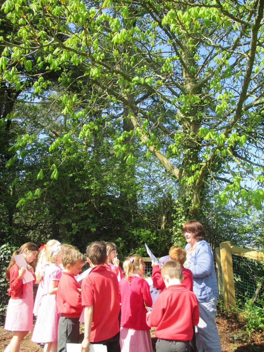 Squirrels class identifying trees