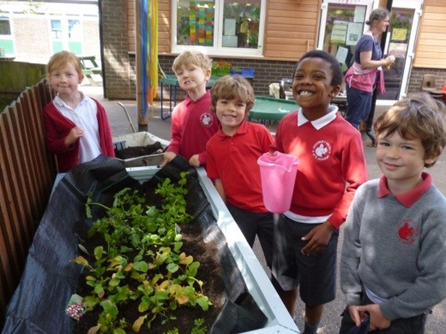 Our Incredible Edable Garden