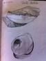 Y7 Pencil Sketch2.jpg