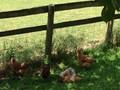 honeybrook farm 078.JPG