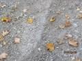 autumn walk (15).JPG
