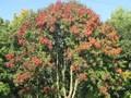 autumn walk (25).JPG