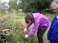 picking blueberries (2).JPG