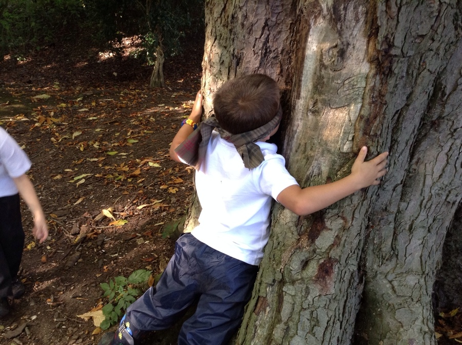 Liam hugging a tree.