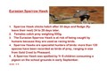 Eurasian Sparrowhawk and spiders-page-001.jpg