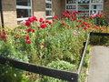 school - right hand side wild flower bed.JPG