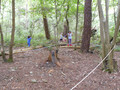 woods 2015 etc 110.JPG