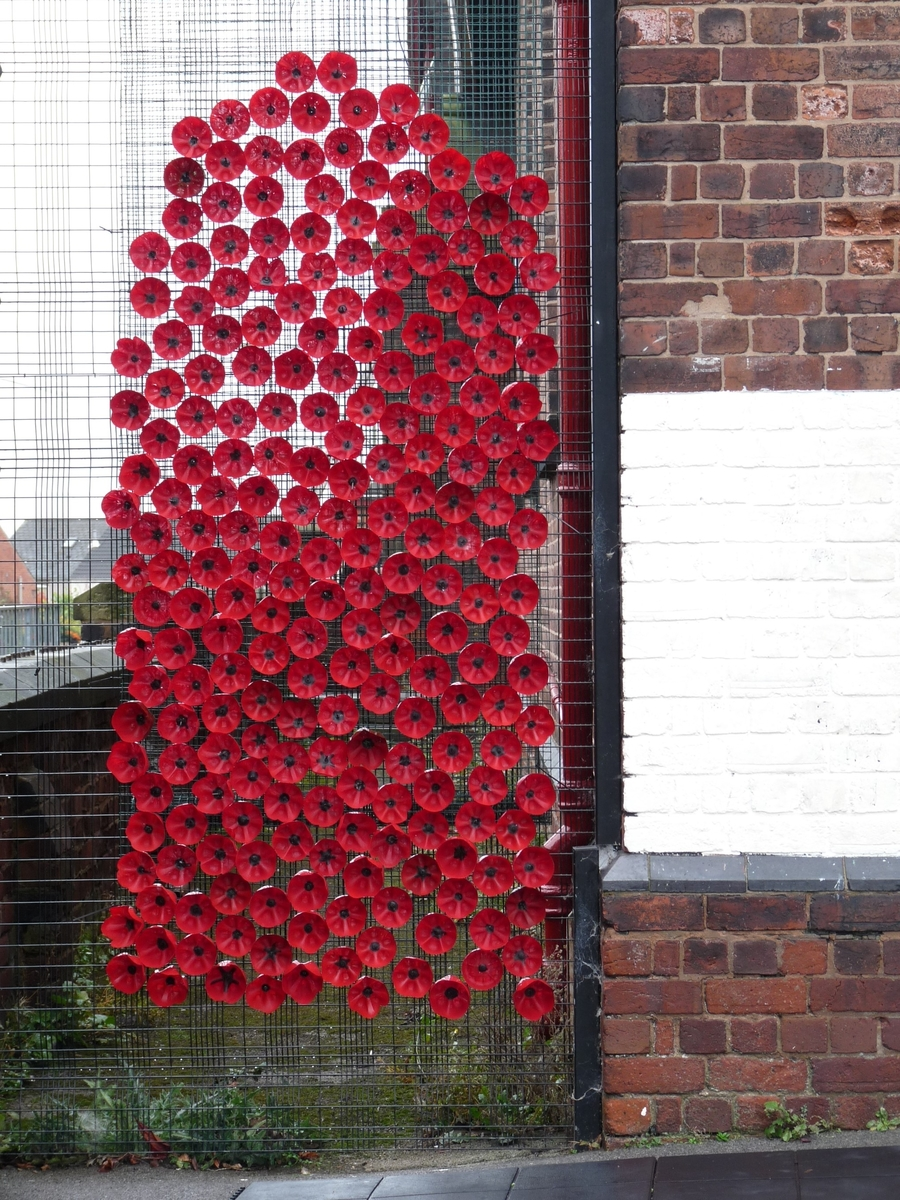 The poppies on display