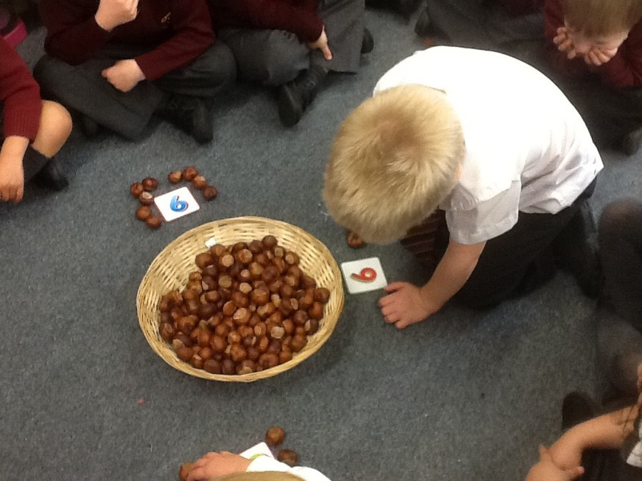 We enjoyed collecting and counting the conkers from the enormous tree in our playground!