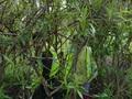forest schools 2013 week one 005.JPG