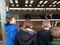 """The children all had lots of questions for Gavin the farm manager.<p class=""""MsoNormal""""><span style=""""font-size: 10pt; line-height: 107%; font-family: 'Trebuchet MS', sans-serif; display: none;"""">The children all had lots of questions for Gavin the farm manager.</span><o:p></o:p></p>"""