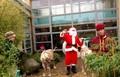 FC & reindeer.jpg
