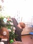 christmas tree decorations (29).JPG