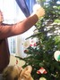 christmas tree decorations (30).JPG