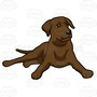 chocolate-labrador-collection-005.jpg