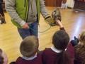 y 3 4 owls.JPG