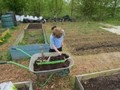 allotment1.jpg