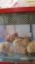 9 chicks (4).jpg
