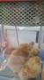 9 chicks (7).jpg