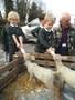Lambs (4).JPG