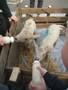 Lambs (6).JPG
