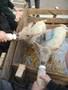 Lambs (7).JPG