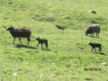 farm walk (10).JPG