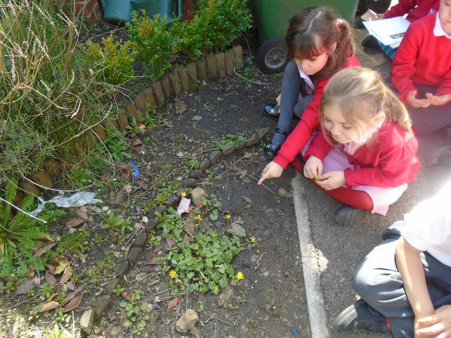 Identifying wild plants on a nature hunt