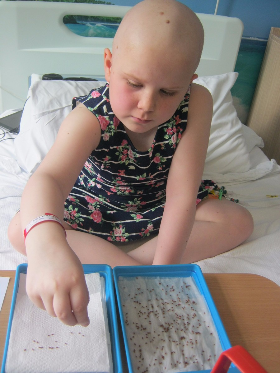 Ella investigates the effects of water on her cress seeds.