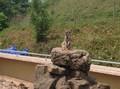 Zoo 8.jpg