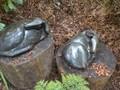 sculpture park 102.JPG