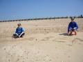 beach 2 (4).JPG